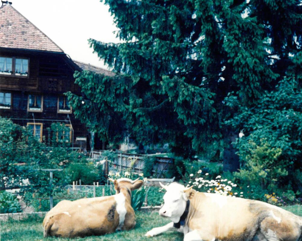 Bauernhaus Gfeller Holzbau